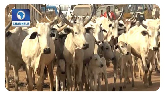 Federal Government Suspends Planned Ruga Program